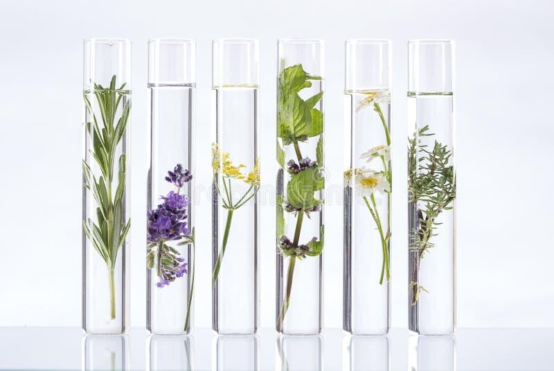 Λύση των ιατρικών εγκαταστάσεων και των λουλουδιών - στοκ εικόνες