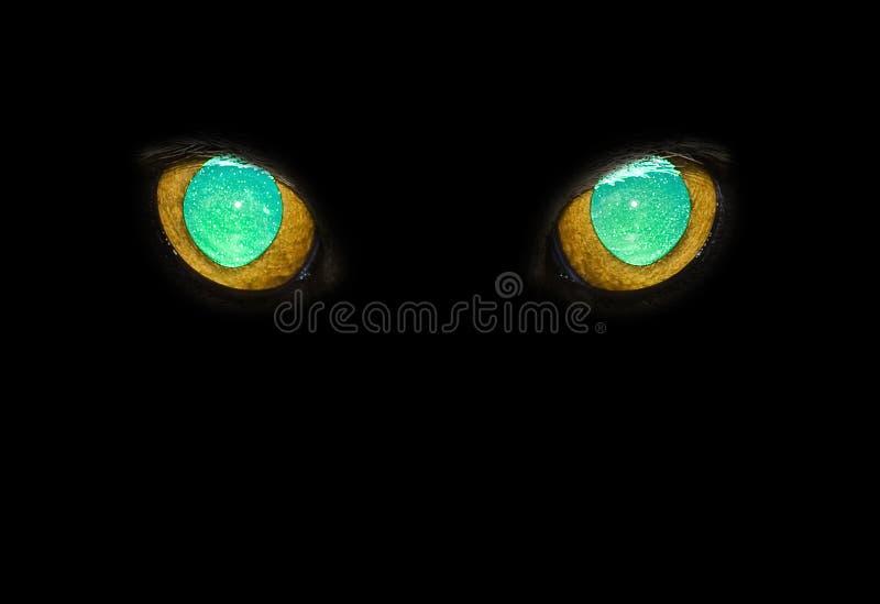 Μάτια γατών ` s στοκ φωτογραφίες με δικαίωμα ελεύθερης χρήσης