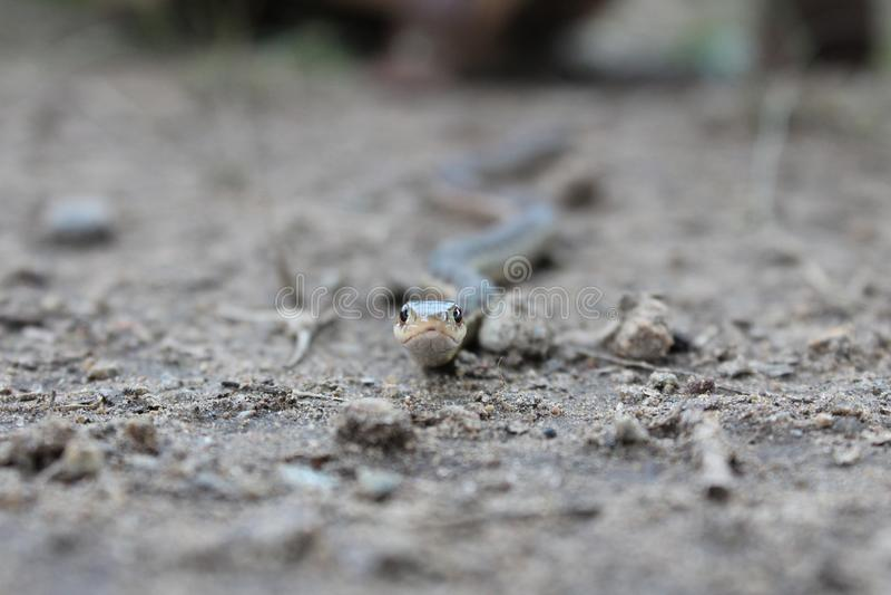 """Μάτια φιδιών """" στοκ φωτογραφία με δικαίωμα ελεύθερης χρήσης"""