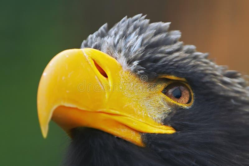 μάτι αετών στοκ φωτογραφίες με δικαίωμα ελεύθερης χρήσης