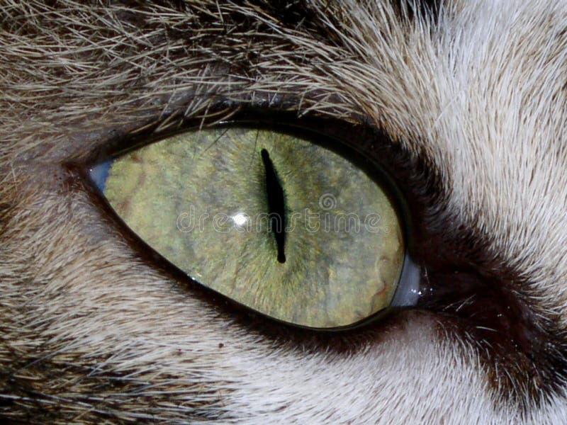 μάτι γατών Στοκ εικόνα με δικαίωμα ελεύθερης χρήσης