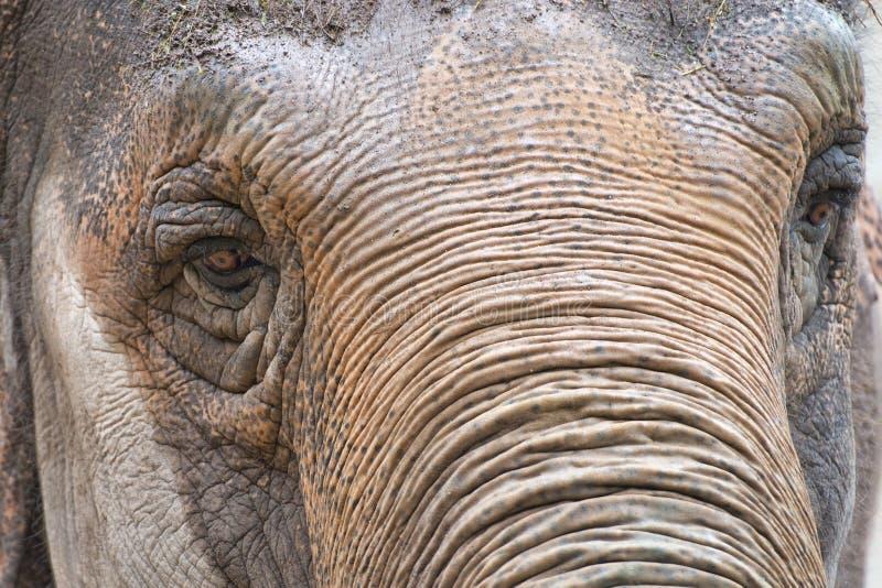 Μάτι ελεφάντων στοκ εικόνα με δικαίωμα ελεύθερης χρήσης
