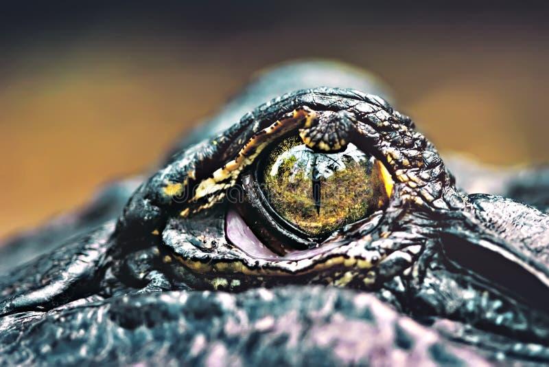 μάτι κροκοδείλων στοκ φωτογραφία με δικαίωμα ελεύθερης χρήσης