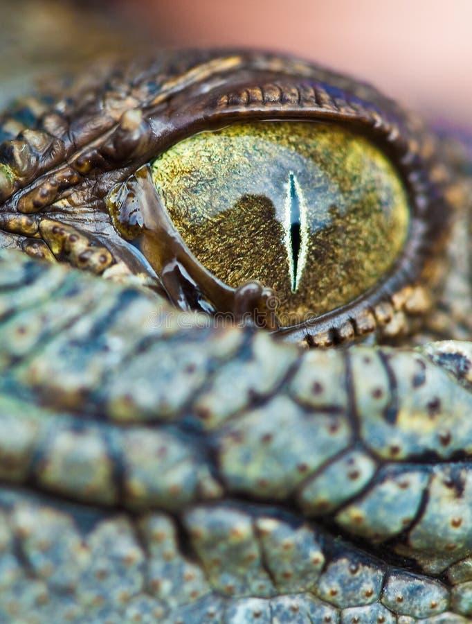 Μάτι κροκοδείλων στοκ εικόνα με δικαίωμα ελεύθερης χρήσης