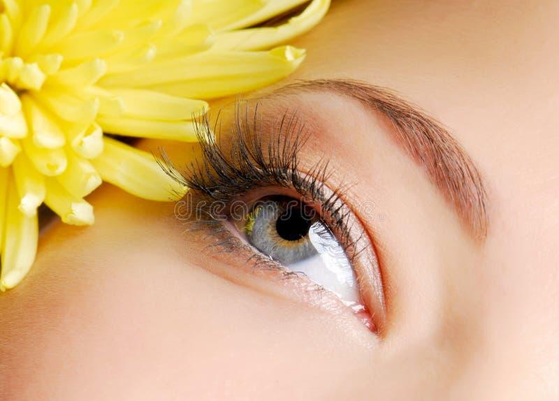 μάτι ομορφιάς στοκ εικόνες με δικαίωμα ελεύθερης χρήσης