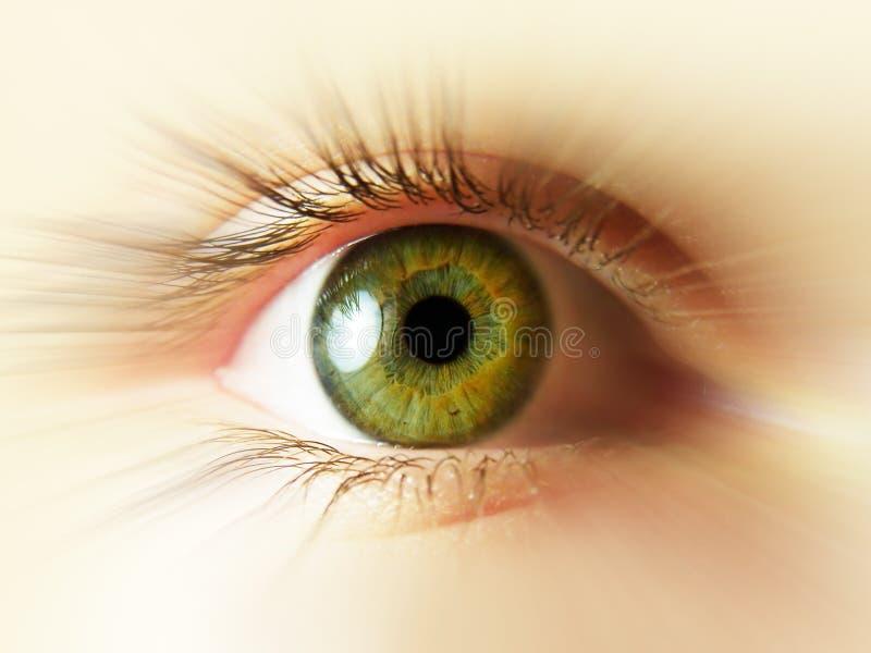 μάτι πράσινο στοκ φωτογραφίες