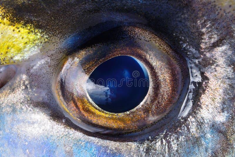 Μάτι της κινηματογράφησης σε πρώτο πλάνο ψαριών στοκ εικόνα με δικαίωμα ελεύθερης χρήσης