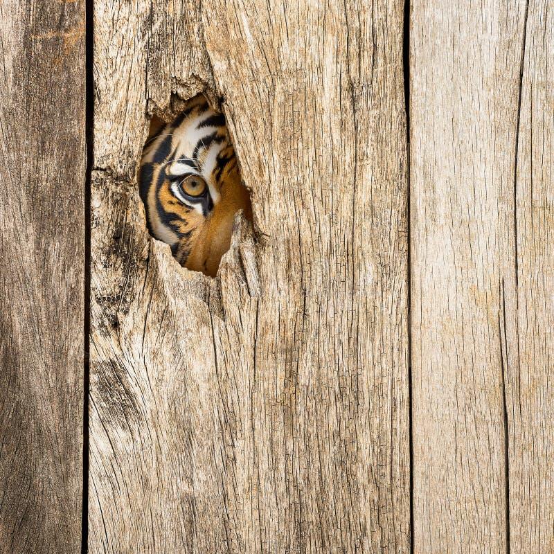 Μάτι τιγρών στην ξύλινη τρύπα στοκ φωτογραφία με δικαίωμα ελεύθερης χρήσης