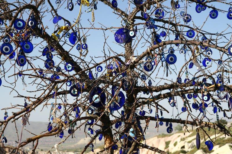 Μάτι του δέντρου προφητών στοκ φωτογραφίες με δικαίωμα ελεύθερης χρήσης