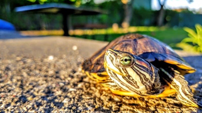 Μάτι χελωνών στοκ φωτογραφία με δικαίωμα ελεύθερης χρήσης