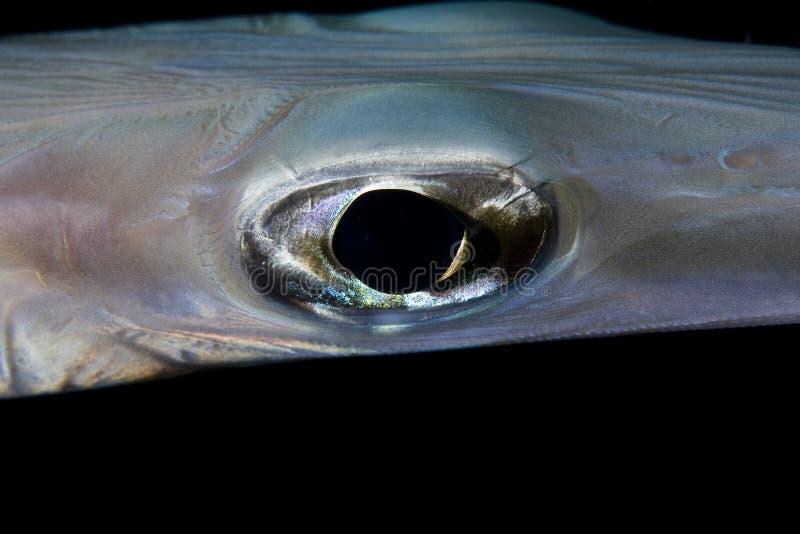 Μάτι ψαριών στοκ φωτογραφίες