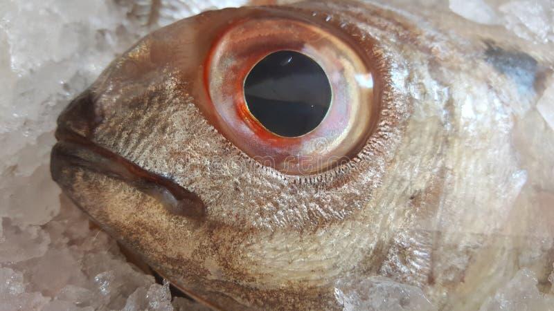 Μάτι ψαριών στοκ εικόνα