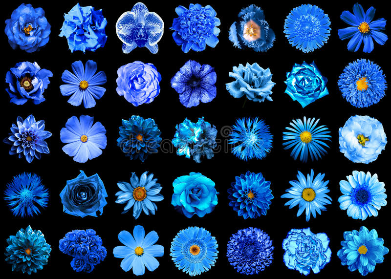 Μέγα πακέτο των φυσικών και υπερφυσικών μπλε λουλουδιών 35 σε 1 που απομονώνεται στοκ εικόνες