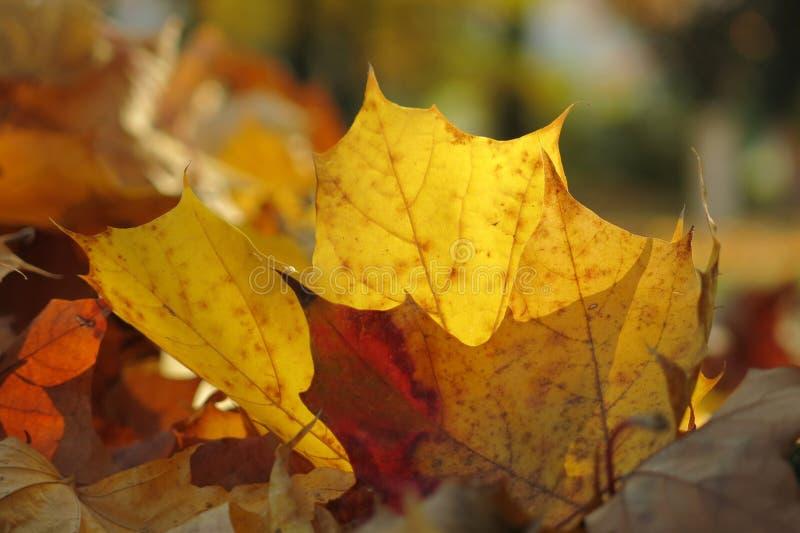 μέγεθος φύλλων εικόνας φθινοπώρου xxxl στοκ φωτογραφία με δικαίωμα ελεύθερης χρήσης