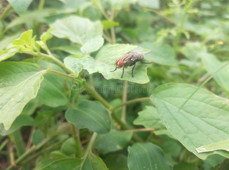 Μέλισσα και φύλλα στοκ φωτογραφίες με δικαίωμα ελεύθερης χρήσης