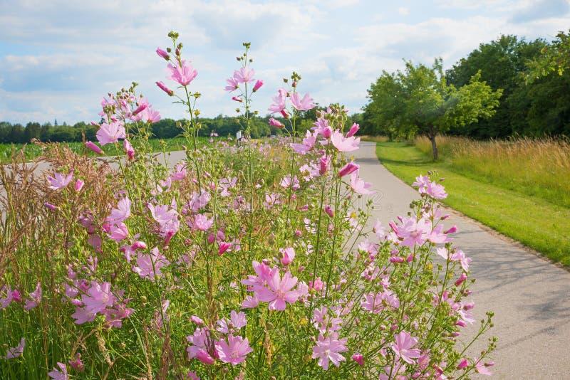 Μέλισσα-φιλική καλλιέργεια του μίγματος wildflower κατά μήκος του bikeway στοκ φωτογραφία με δικαίωμα ελεύθερης χρήσης