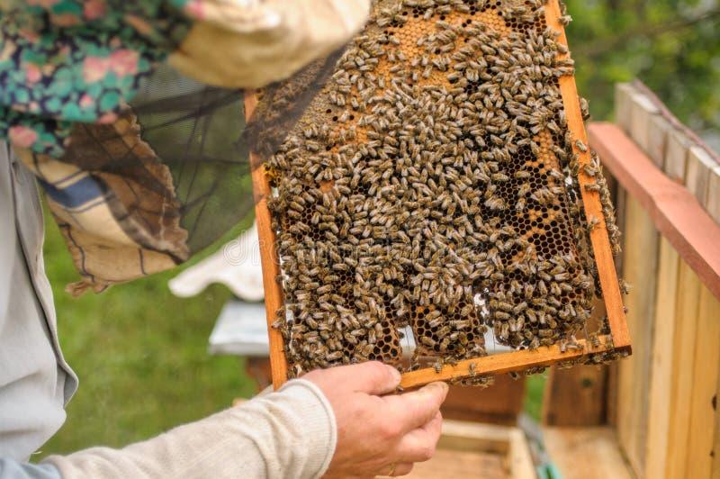 Μέλισσες εργασίας στις κηρήθρες τρόφιμα υγιή στοκ φωτογραφία με δικαίωμα ελεύθερης χρήσης