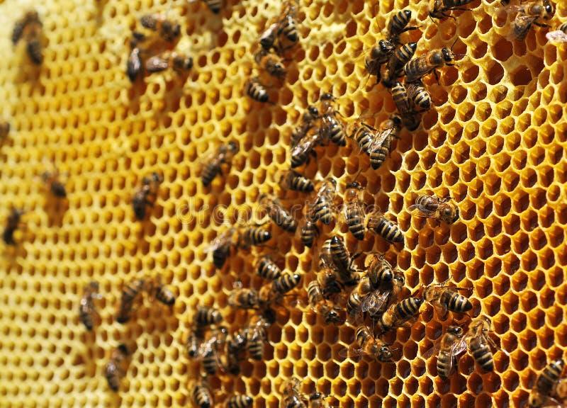 Μέλισσες εργασίας στοκ εικόνα