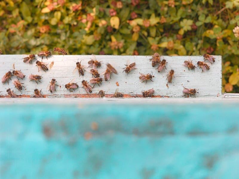 Μέλισσες που εργάζονται κοντά στην κυψέλη στοκ φωτογραφία με δικαίωμα ελεύθερης χρήσης