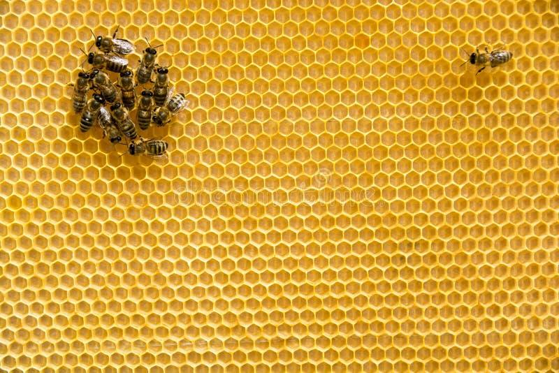 Μέλισσες στην κηρήθρα στοκ εικόνες