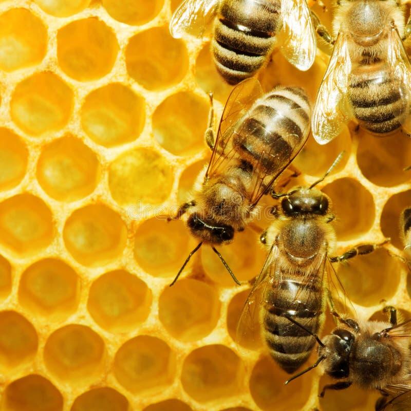μέλισσες honeycells στοκ εικόνα με δικαίωμα ελεύθερης χρήσης
