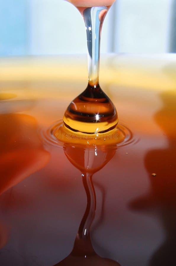 μέλι απελευθέρωσης στοκ εικόνες