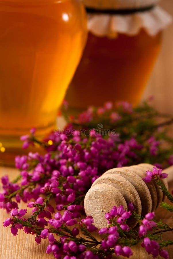 μέλι ερείκης στοκ εικόνα με δικαίωμα ελεύθερης χρήσης