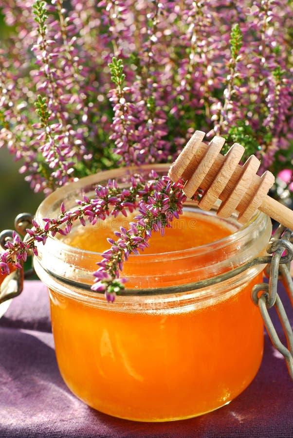 μέλι ερείκης στοκ φωτογραφία με δικαίωμα ελεύθερης χρήσης