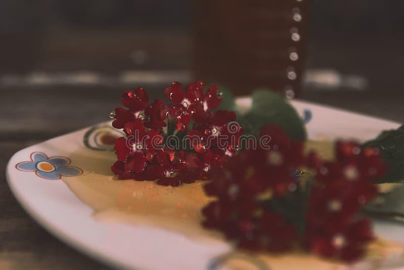 Μέλι και λουλούδια στοκ εικόνες