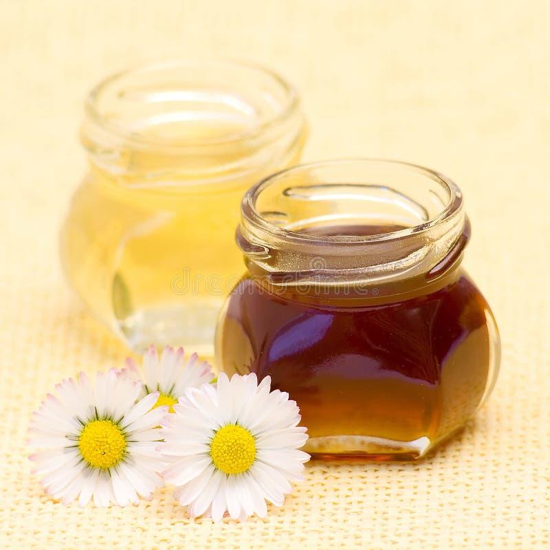 μέλι μαργαριτών στοκ φωτογραφία με δικαίωμα ελεύθερης χρήσης