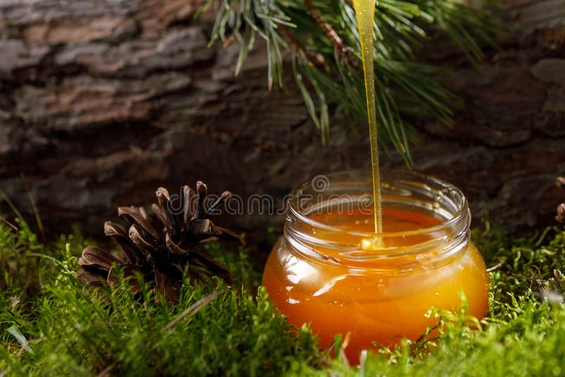 Μέλι που ρέει σε ένα βάζο γυαλιού σε ένα υπόβαθρο του δασικού φλοιού βρύου και δέντρων στοκ εικόνες με δικαίωμα ελεύθερης χρήσης
