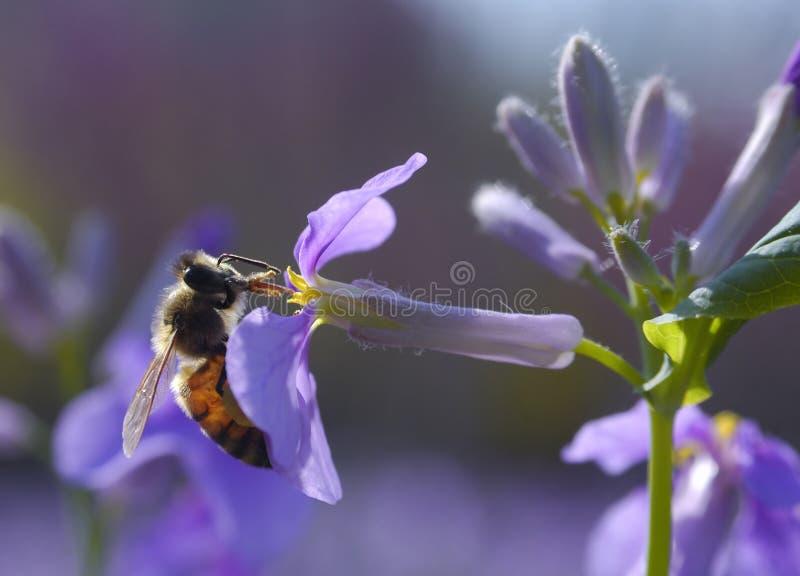μέλι συγκομιδής μελισσώ&n στοκ φωτογραφίες με δικαίωμα ελεύθερης χρήσης