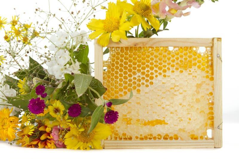 μέλι στοκ φωτογραφίες με δικαίωμα ελεύθερης χρήσης