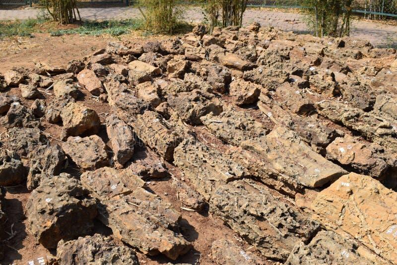 μέρη πετρών και δέντρων στοκ εικόνες