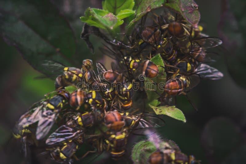 Μέρη των μελισσών μελιού στις ιερές εγκαταστάσεις βασιλικού στοκ φωτογραφία με δικαίωμα ελεύθερης χρήσης