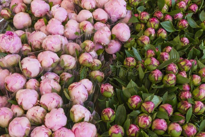 Μέρη των όμορφων και ρομαντικών ιωδών και ρόδινων peonies στο floral SH στοκ εικόνες με δικαίωμα ελεύθερης χρήσης