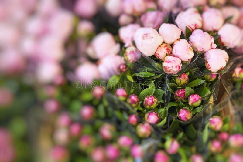 Μέρη των όμορφων και ρομαντικών ιωδών και ρόδινων peonies στο floral SH στοκ εικόνες