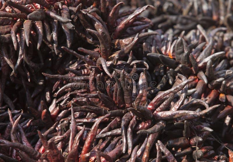 Μέρος του ξηρού τσίλι στοκ φωτογραφίες με δικαίωμα ελεύθερης χρήσης
