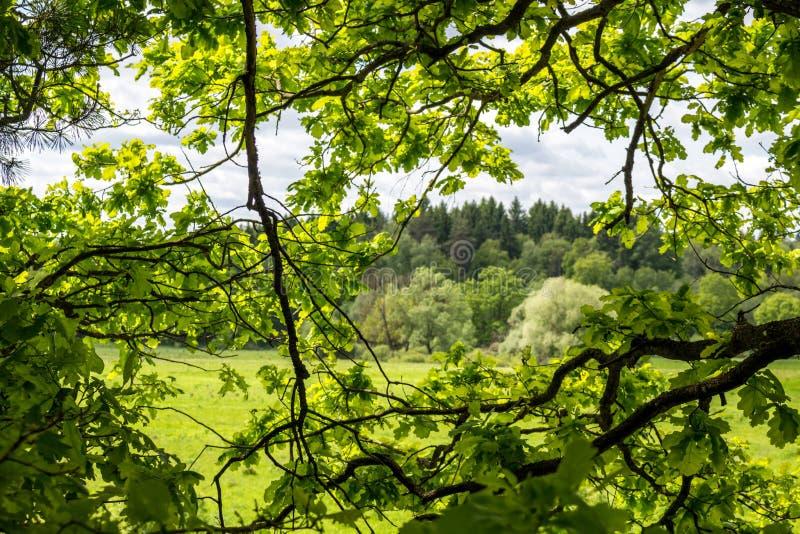 Μέσα στην κορώνα δέντρων στοκ φωτογραφία με δικαίωμα ελεύθερης χρήσης