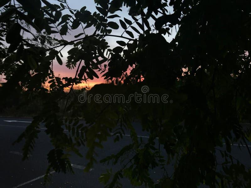 Μέσα στο δέντρο στοκ εικόνες με δικαίωμα ελεύθερης χρήσης