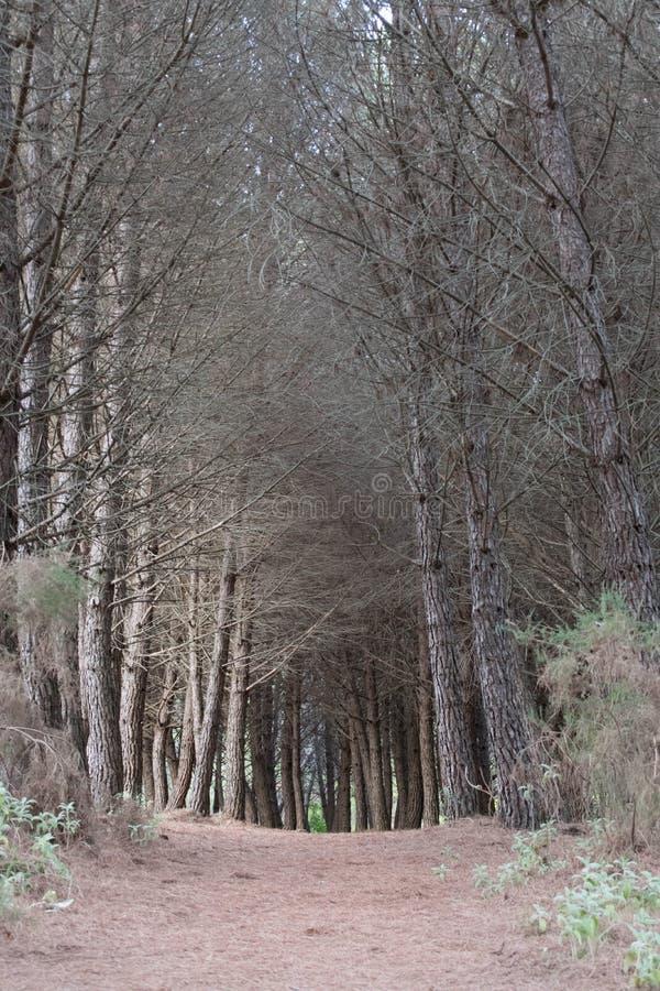 Μέσω του δάσους στοκ φωτογραφίες με δικαίωμα ελεύθερης χρήσης