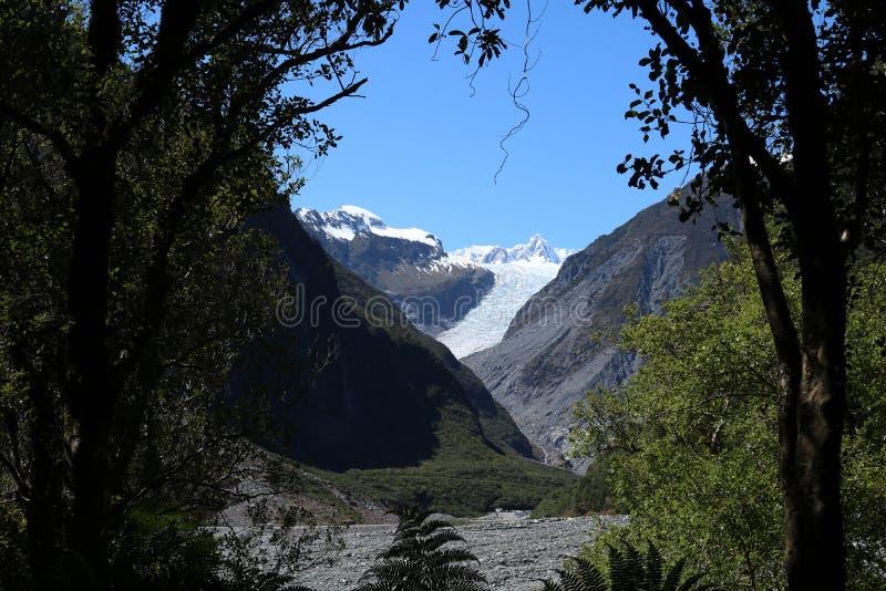 Μέσω του παγετώνα αλεπούδων δέντρων, Te Moeka ο Tuawe, NZ στοκ φωτογραφία με δικαίωμα ελεύθερης χρήσης
