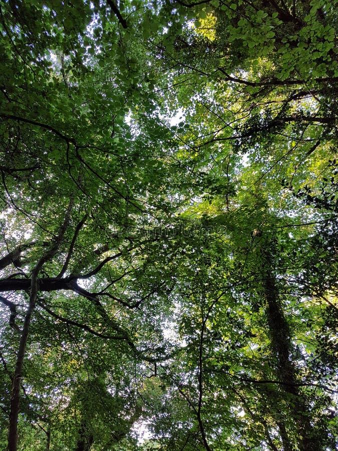 Μέσω των δέντρων στοκ εικόνα