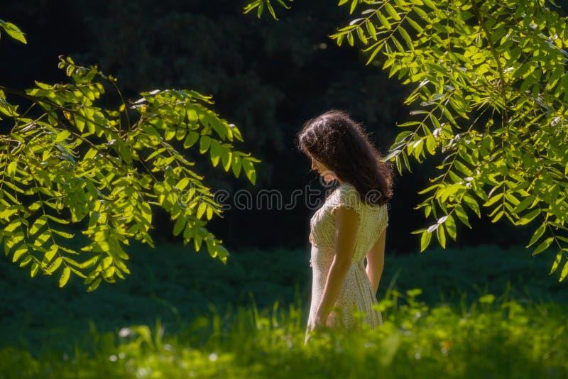 Μέσω των δασών στοκ φωτογραφία με δικαίωμα ελεύθερης χρήσης