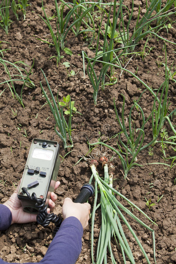 Μέτρηση των επιπέδων ακτινοβολίας λαχανικών στοκ φωτογραφία με δικαίωμα ελεύθερης χρήσης