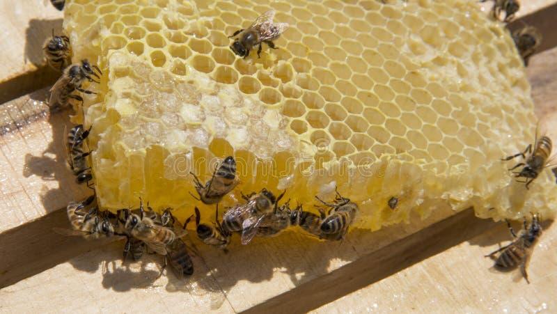 Μέλισσα και μέλι στοκ εικόνες