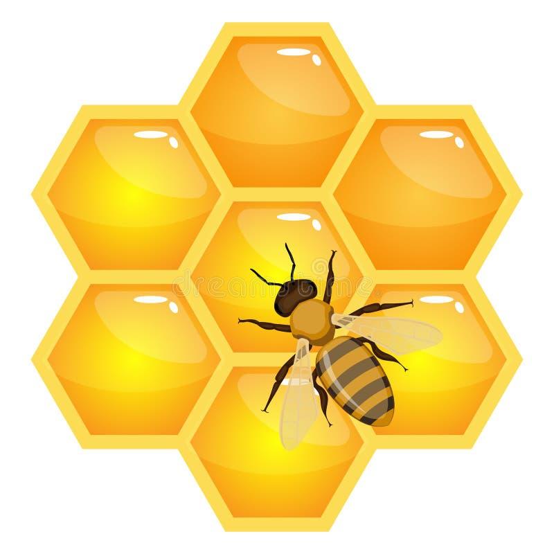 Μέλισσα στις κηρήθρες που απομονώνονται στο άσπρο υπόβαθρο Οργανικό διάνυσμα μελιού ελεύθερη απεικόνιση δικαιώματος