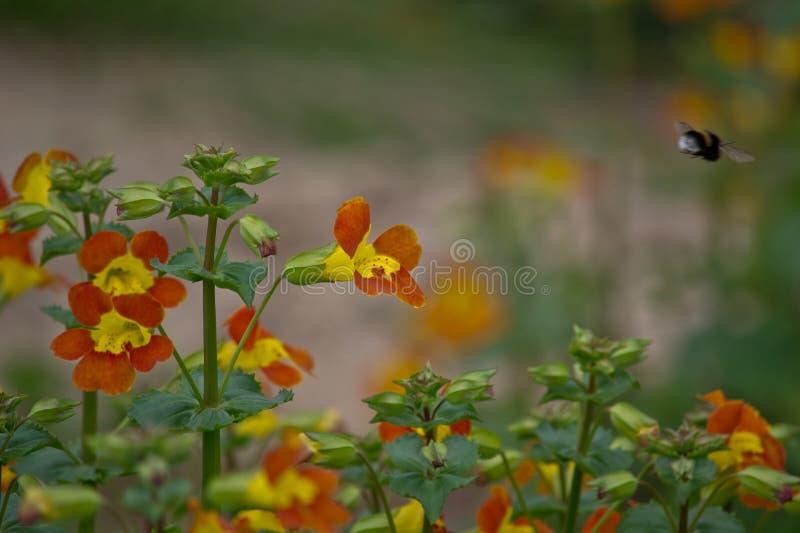 Μέλισσα! στοκ φωτογραφίες με δικαίωμα ελεύθερης χρήσης