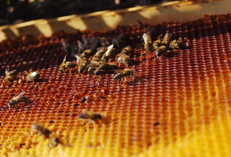 Μέλισσες εργασίας στις κηρήθρες στοκ φωτογραφία