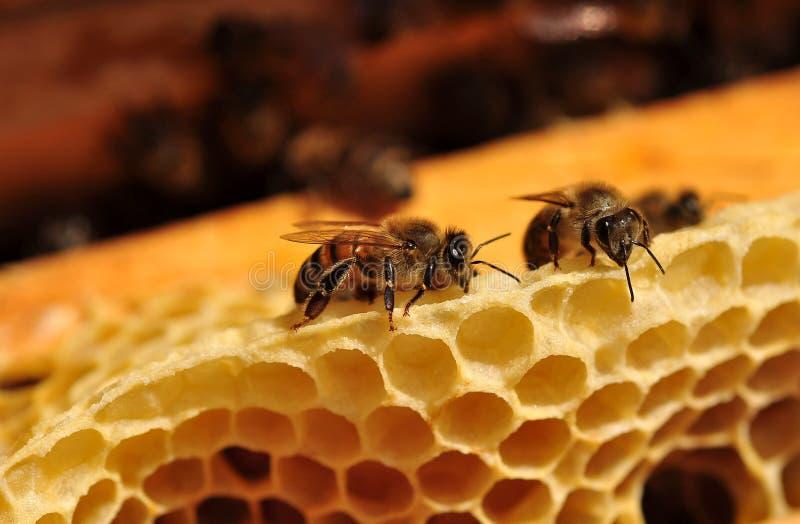 Μέλισσες εργασίας στοκ φωτογραφίες